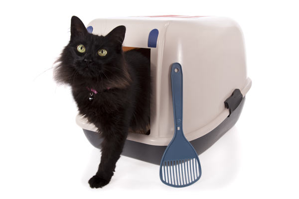 See what cat litter brands rate the best on Viewpoints.
