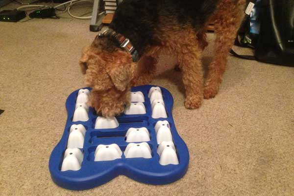 dog treat puzzle toy